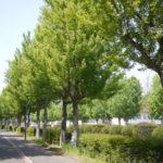 つくばの景観の立役者!街路樹の魅力。