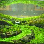 水の中の森!「水草展2013」