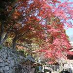 紅葉の筑波山神社で七五三詣り
