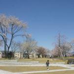 New桜スポット!学園の杜公園