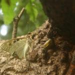 もうすぐ夏休み!昆虫採集をしよう!