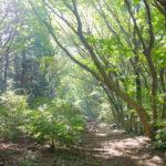 筑波山の森について学ぼう!広根場林道と筑波山自然展~後編~