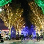 輝く冬の夜☆つくば光の森