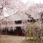 乙女のつくば道で優雅な春を満喫!