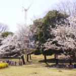 日々の生活の中で、桜を愛でる!