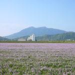 春の筑波山の風景