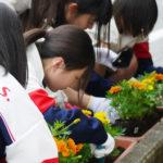 街を彩る「つくば道花の会」