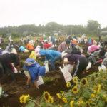 じゃがいも豊作!農地再生チャレンジ収穫祭