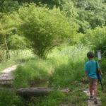 守谷*野鳥の森散策路と鳥のみち