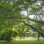 自然をそのまま公園に!「赤塚公園」