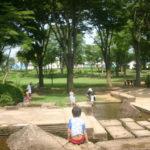夏を涼しく過ごそう!並木公園