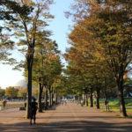 秋のつくば公園通り♪