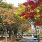 深まりゆく秋!紅葉の筑波大学