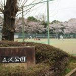 守谷・立沢公園でお花見!