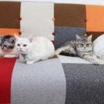 つくばエリア初!癒しの猫カフェopen!「ビークラブ猫店」