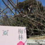 梅まつり前なので、筑波山の楽しみ方をご紹介♪(前編)
