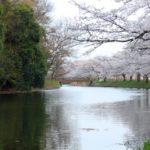 TX沿線の桜の名所巡り(福岡堰・りんりんロード)