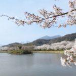TX沿線の桜の名所巡り(北条大池・万博記念公園)