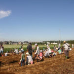 大人気!豊里ゆかりの森の「サツマイモ掘り体験」