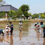 筑波山麓の豊かな実り♪泥んこ田植え体験