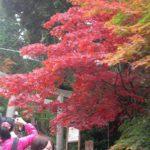 秋の筑波山登山!