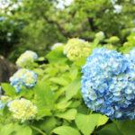 つくば散歩日和~筑波山で過ごす癒やし時間~