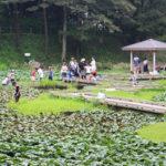 夏の自然遊び!高崎自然の森でザリガニ!クワガタ!ブルーベリー!