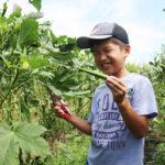 自然の恵み!夏の野菜収穫体験