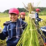 実りの秋!稲刈り体験~つくばスタイル科~