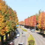 私の大好きな風景!秋色に染まる街つくば