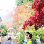 秋を満喫!紅葉を楽しむ筑波山登山・前半