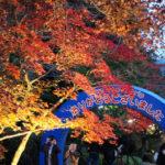 秋を満喫!紅葉を楽しむ筑波山登山・後半