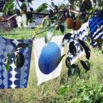 自然が育む日本の色を継ぐものづくり「風布-Aizome Foopu-」