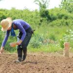 長く、大切に使い続けたい暮らしの道具~種から育てるつくばの箒~