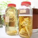 薬用植物について知る「薬用植物資源研究センター」