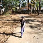 木々の冬支度が整う守谷「松ケ丘公園」へ
