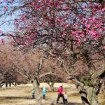 つくば散歩日和♪~梅香る公園&知育スポットへふらっとドライブ~