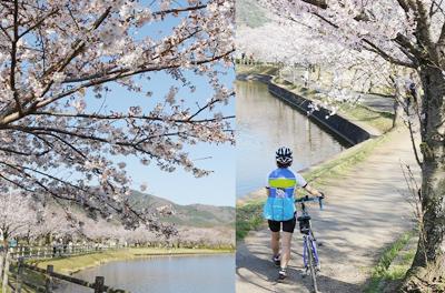 筑波山を望む春のサイクリング♪りんりんロードそばのおもてなしの店「彩食工房ひるくらいむ」