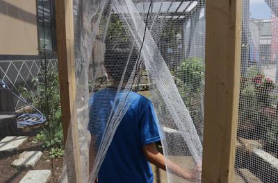 夏休みの自由研究にも☆チョウの観察ができる直売所「えるふ農園」