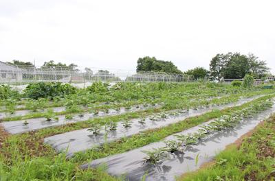 愛情たっぷりの野菜を手から手へ 守谷「まーの農園」