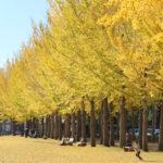 手ぶらで紅葉ピクニック♪秋の「科学万博記念公園」へ