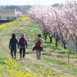 守谷でのんびり散歩日和♪早咲き桜の散歩道
