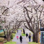 春爛漫♪TXつくば駅~守谷駅周辺の桜スポット