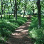 新緑の高崎自然の森へ~アジサイ、スイレン、ハナショウブの小路~
