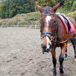 筑波山麓で乗馬体験
