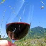 「Bee's Knees Vineyards」のワインを愉しむ