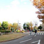 自転車の練習だけじゃない!楽しみ方いろいろ「さくら交通公園」