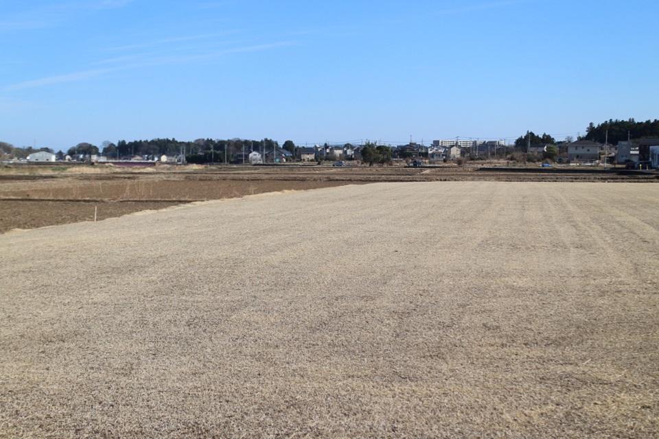 広大な芝畑