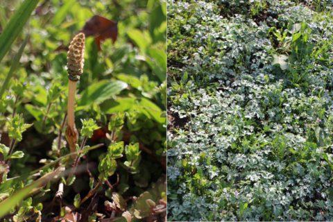 春を代表する草花がたくさん見つかりました