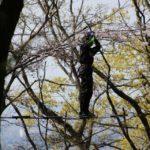 筑波山でスリリングな空中散策!「フォレストアドベンチャーつくば」